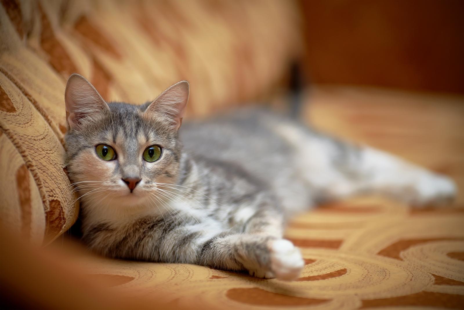 Tinggalkan Kucing Di Rumah? Ini Yang Anda Perlu Lakukan