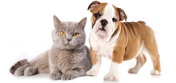 3 Manfaat Mempunyai Haiwan Peliharaan Di Rumah