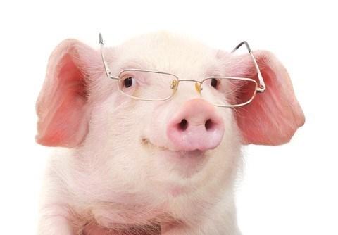 Ada Babi Dalam Vaksin?